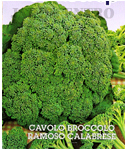 Sprouting Brocoli Calabrese